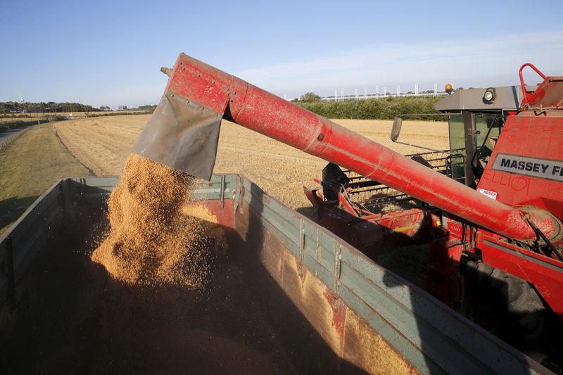مؤسسة الحبوب السعودية تطلب 295 ألف طن من القمح في مناقصة