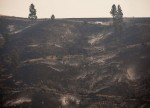 Australia boosts emergency funding for bushfire-affected businesses