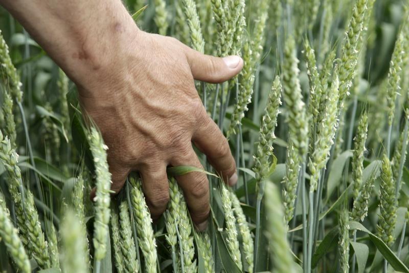 © Reuters.  Valor da produção agrícola do Brasil pode cair 5% em 2018 com safra menor, diz governo