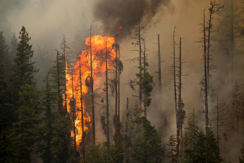 산불 (자료사진)