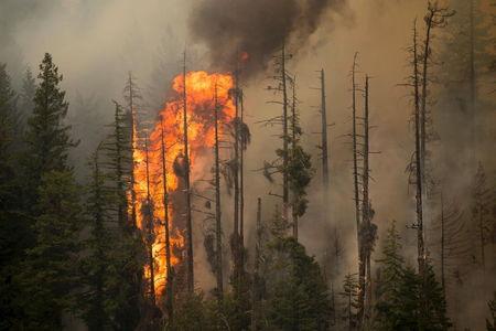 Bank Dunia: Ekonomi Indonesia Rugi $5,2 Miliar akibat Kebakaran Hutan