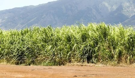 Sugar Prices Near the Lowest in a Decade