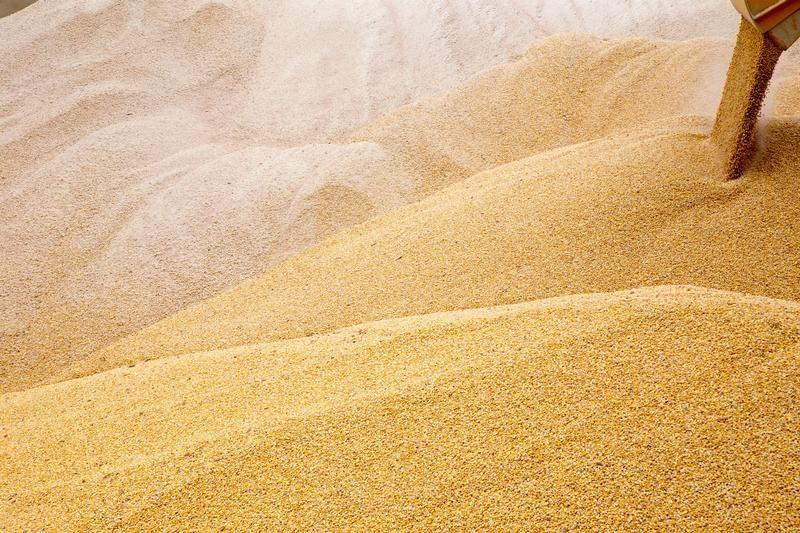 © Reuters.  Продажа зерна из госфонда в пятницу выросла в 2,2 раза