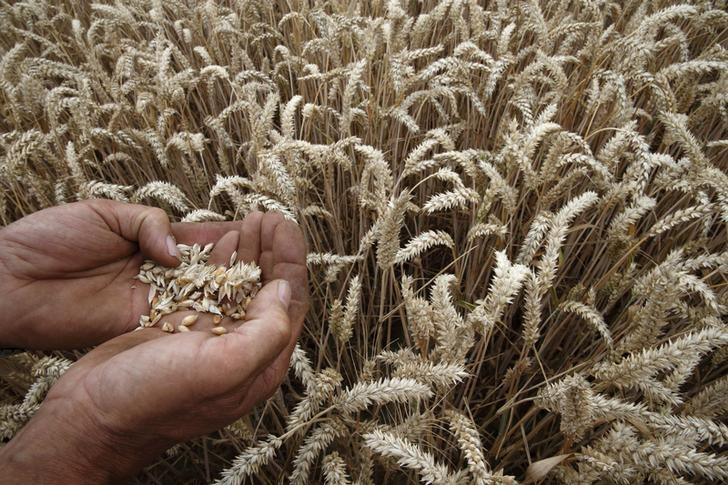 CME to launch Australian wheat futures with Platts index By