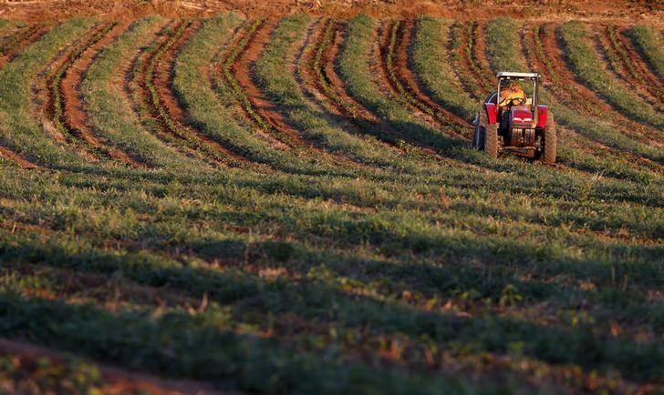 © Reuters.  Contratação de crédito rural do Plano Safra sobe 19% em 5 meses do ciclo 2018/19