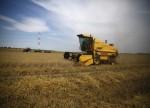 shareribs.com - Mais und Weizen etwas fester