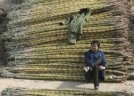 SOFTS-Raw sugar firms on India buffer stocks plan