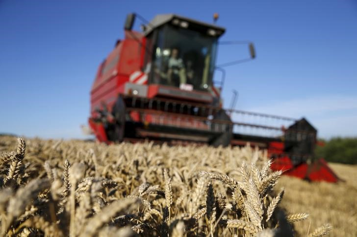Ukrainian wheat is lowest offer in Egypt's GASC tender -traders By Reu