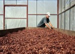 SOFTS-Arabica coffee nosedives, second month hits 13-year lows