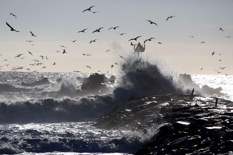 © Reuters.  REFILE-Australian man dies after shark attack in popular tourist area