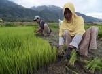 एशिया चावल -वियतनाम की कीमतों में डर के कारण फिलीपींस आयात पर लगाम लगा सकता है