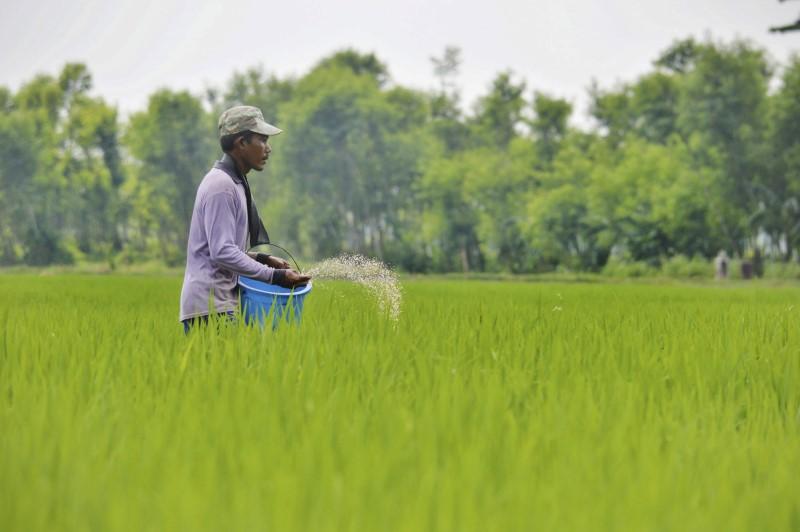 Asia Rice-Indian prices gain as Bangladesh traders lap up