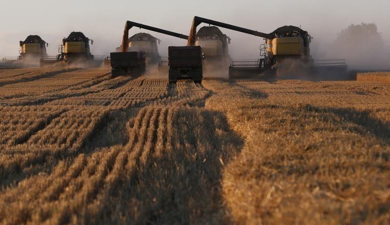 Экспортные цены на российскую пшеницу упали до 2-летнего минимума