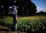 Brasil tem 36 casos de pacotes oriundos da Ásia com sementes não solicitadas