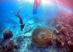 UPDATE 1-Starfish eating Australia's Great Barrier Reef alarm scientists