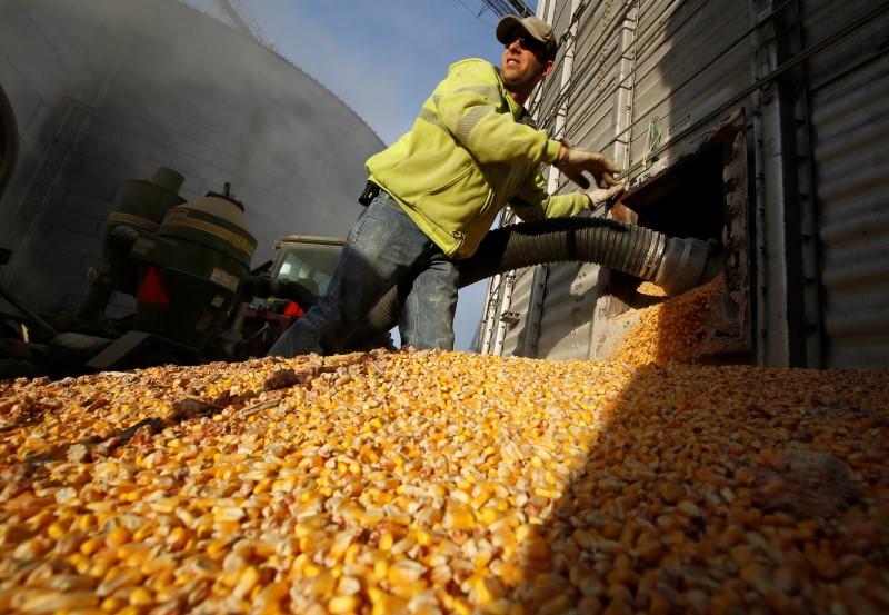 © Reuters.  USDA eleva projeção para safra de milho dos EUA, reduz a de soja