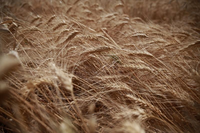 © Reuters.  Egypt's GASC buys 350,000 tonnes of wheat - trade