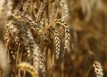 ARiMR od połowy X rozpocznie wypłatę zaliczek dla rolników, wartość 2,4 mld euro