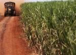 Lower EU sugar imports tighten supplies ahead of liberalisation