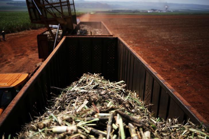 © Reuters.  Archer reduz estimativa de safra de cana 2018/19 do CS; eleva números do etanol
