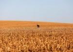 中國7月出口意外喜增3.3%大豆進口同比減少逾10%