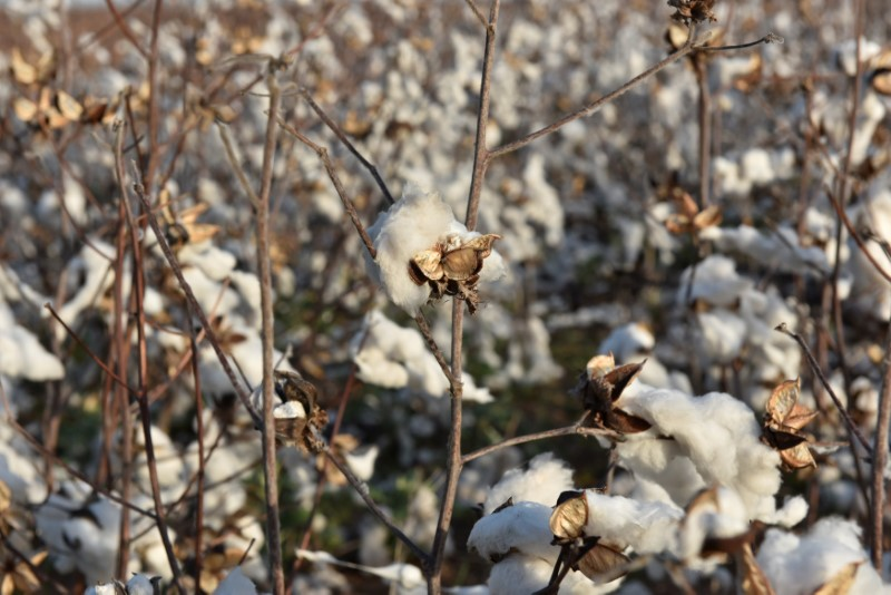 Retail Struggles Point to Cotton Supply Glut, Stalling Rally