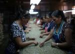 Trabalhadores rurais da Bahia migram para a colheita do café de Minas Gerais