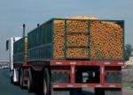 PP quer avaliação sobre exportações de suco de laranja em acordo UE-Mercosul