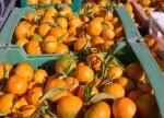 Citrosuco anuncia novo navio para transporte de suco de laranja