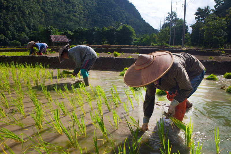 UPDATE 1-Egypt's GASC receives offers for rice in tender -traders