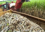 SOFTS-Raw sugar rises on short covering, lagging Indian exports
