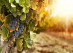 Upped KKR offer for Australia's Treasury Wine raises bidding war prospect