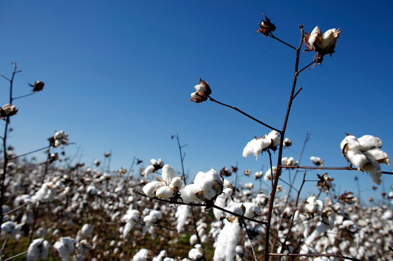 Global Heatwave Pummels CommoditiesFrom TexasCotton to French Power