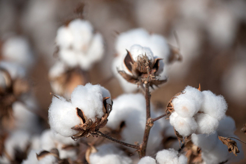 ICE cotton futures end flat after hitting 3-week lows