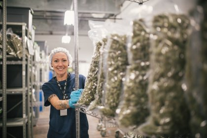 The cannabis producer Canopy Growth is getting whacked after missing big on revenue