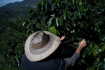 Peace gives Colombian coffee an extra shot