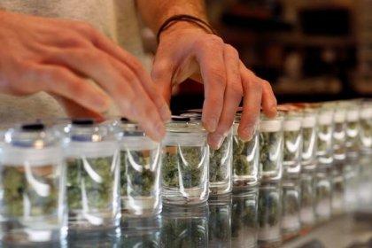 Congresso do Peru aprova projeto de lei para uso medicinal da maconha