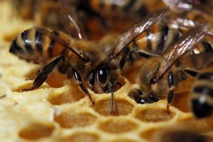 L'autorisation de pesticides tueurs d'abeilles réexaminée