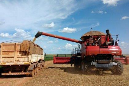 Com plantio atrasado de soja, MT registra replantio e espera chuvas