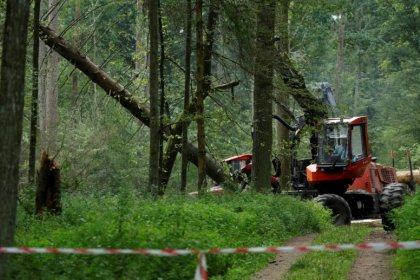 Poland faces 100,000 euros a day fine if it continues logging in forest
