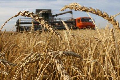 مصر تشتري 295 ألف طن من القمح الروسي في مناقصة