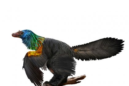 Chinese 'rainbow dinosaur' had iridescent feathers like hummingbirds