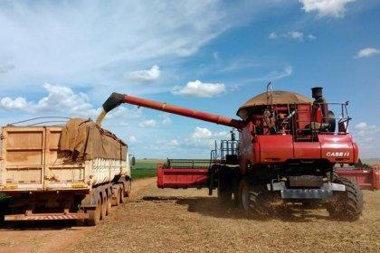 Colheita de soja no Brasil começa bem e safra pode ter recorde, aponta Rally da Safra