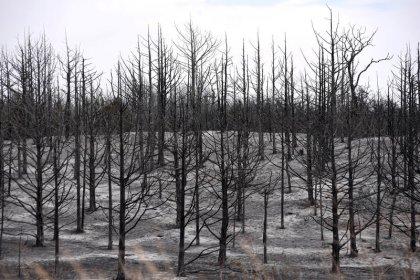 مقتل شخصين في حرائق غابات بأوكلاهوما وتحذيرات من اتساع رقعتها
