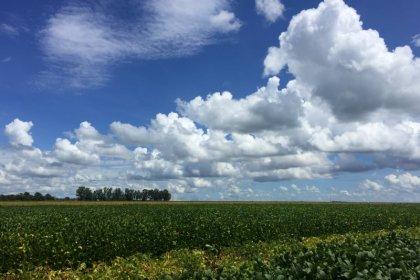 Exportação de soja do Brasil tem recordes com tensão EUA-China e seca na Argentina
