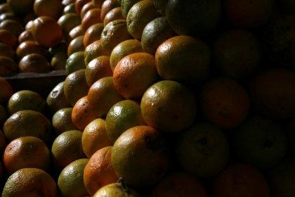 Exportação de suco de laranja do Brasil para os EUA atinge recorde