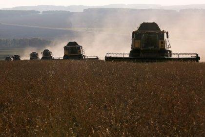 Экспортные цены на российскую пшеницу выросли на прошлой неделе вслед за мировыми