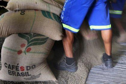 Exportação de café verde do Brasil cresce 25,9% em novembro, diz Cecafé