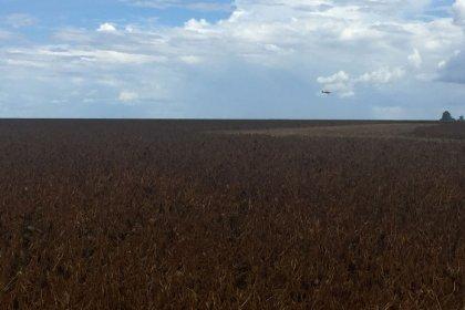 USDA vê safra de soja do Brasil em 122 mi t, eleva previsão de exportação