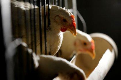 Exportação de carne de frango do Brasil cairá 5,1% em 2018